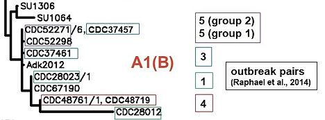Cbotulinum dendrogram fragment.jpg