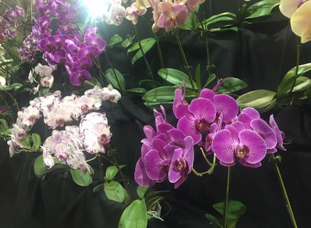Guayaquil enamora al mundo con exhibición de orquídeas.