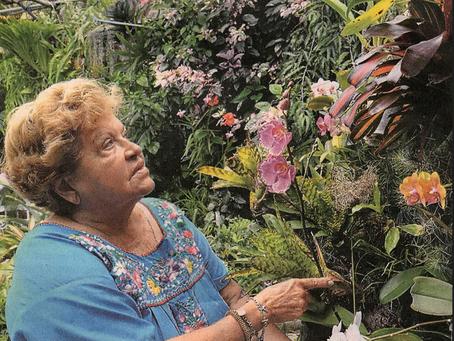 Guayaquil recibe a las orquídeas del mundo.