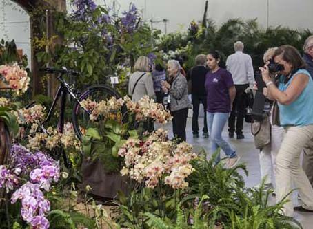 Diminuta orquídea ecuatoriana, entre las más galardonadas de la WOC 2017