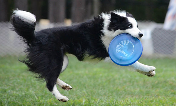 River qui attrape une Frisbee bleu
