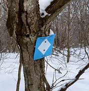 Taconic_Crest_Trail_Marker.jpg