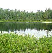 mud_lake1.jpg