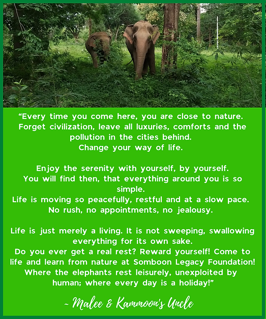 """Copy of """"Every time you come here, you are close to nature. Forget civilization, leave all"""