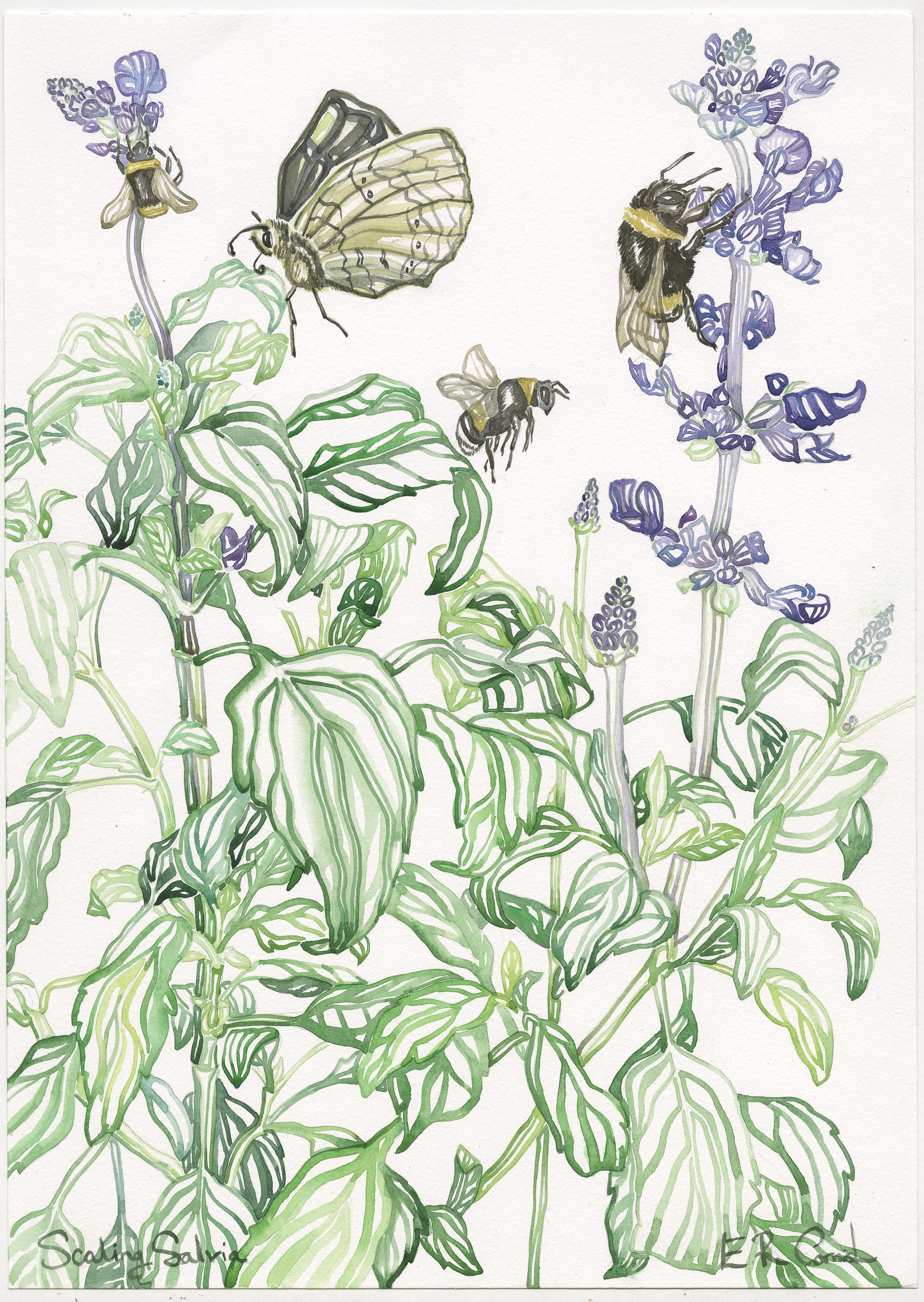 Scaling Salvia