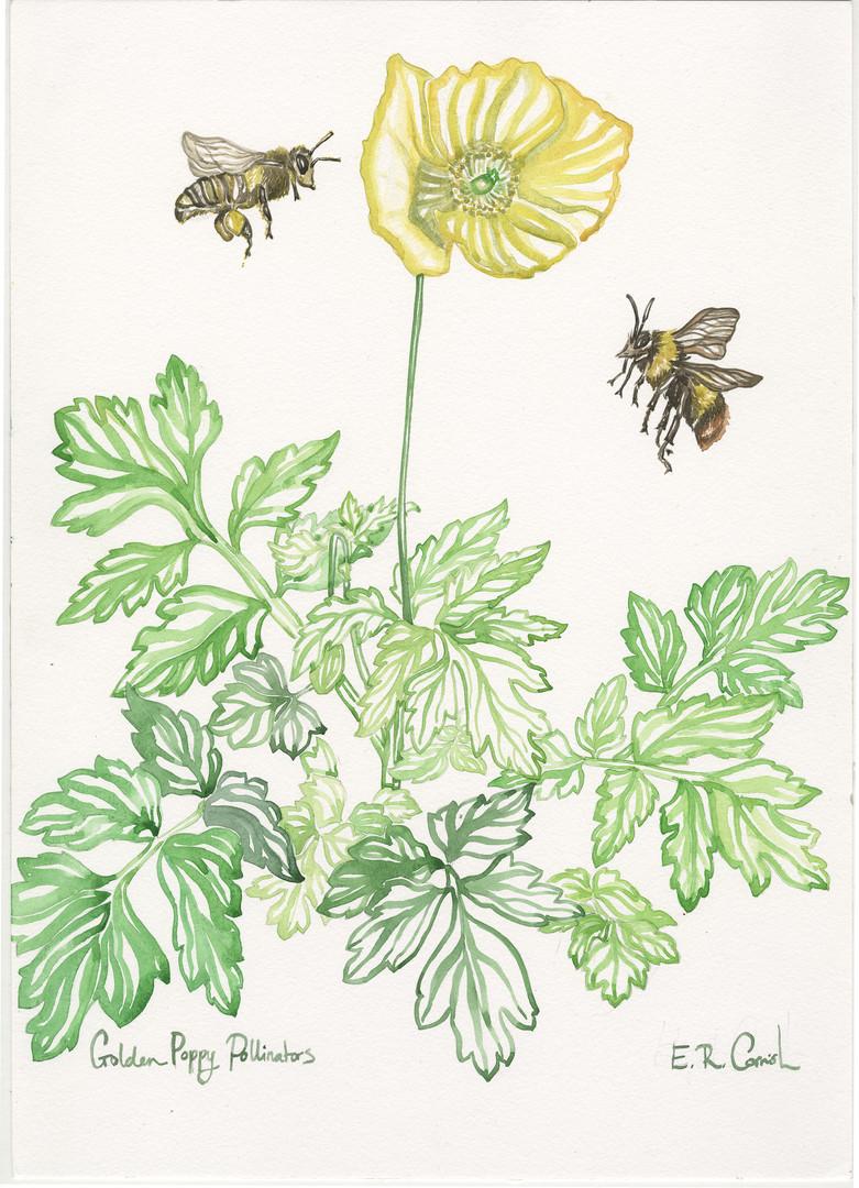 Golden Poppy Pollinators.jpg