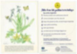 SLP Leaflet Scan.jpg