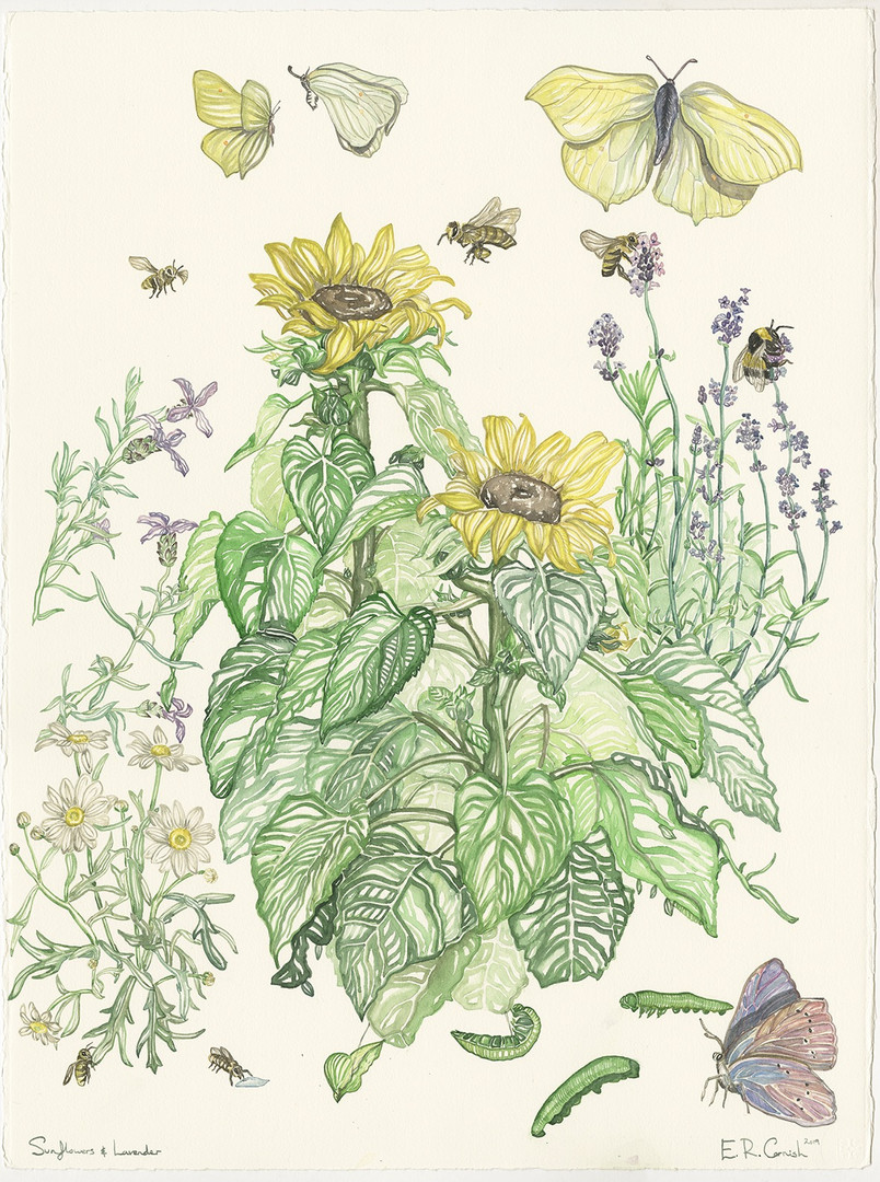 Sunflowers and Lavender, 594 x 841 mm, W