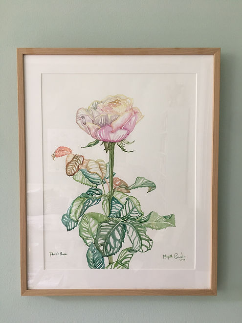 Petit's Rose - framed