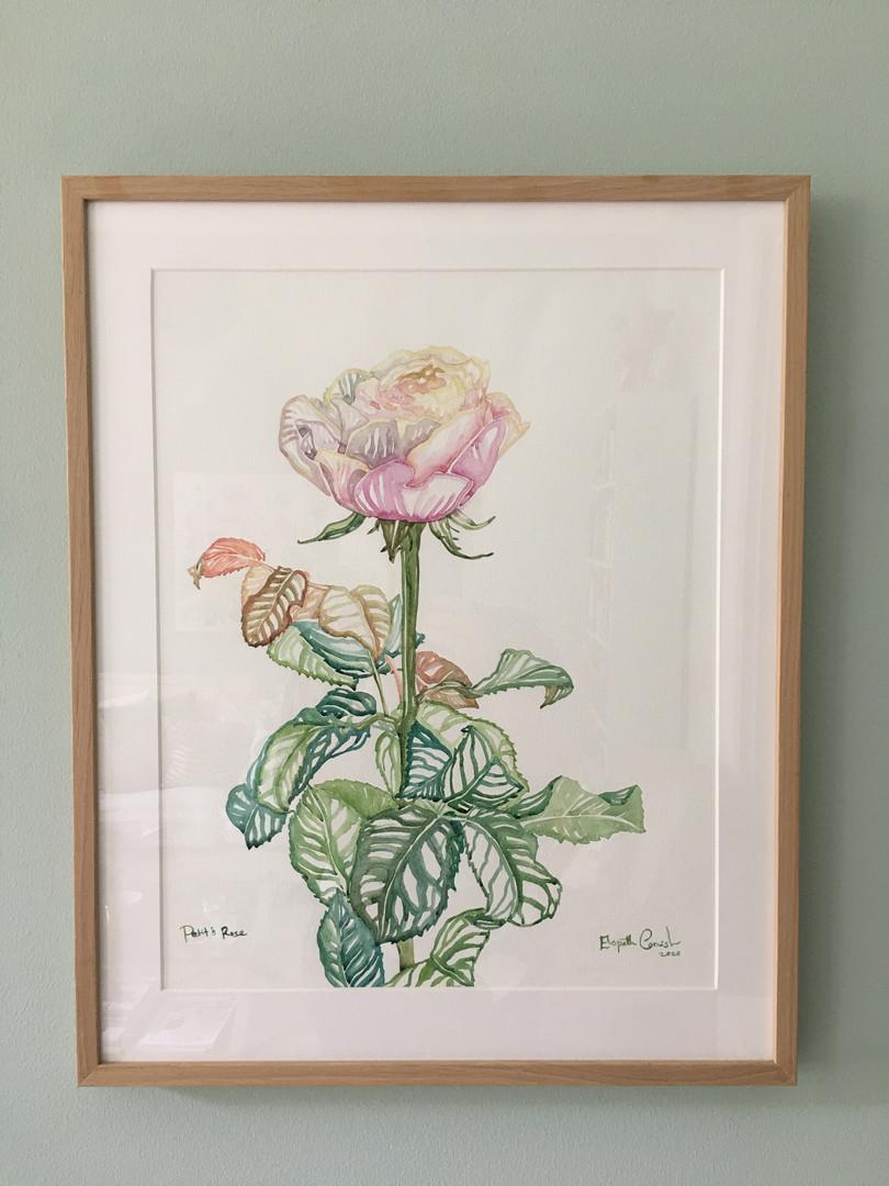 Petit's Rose - framed.JPG