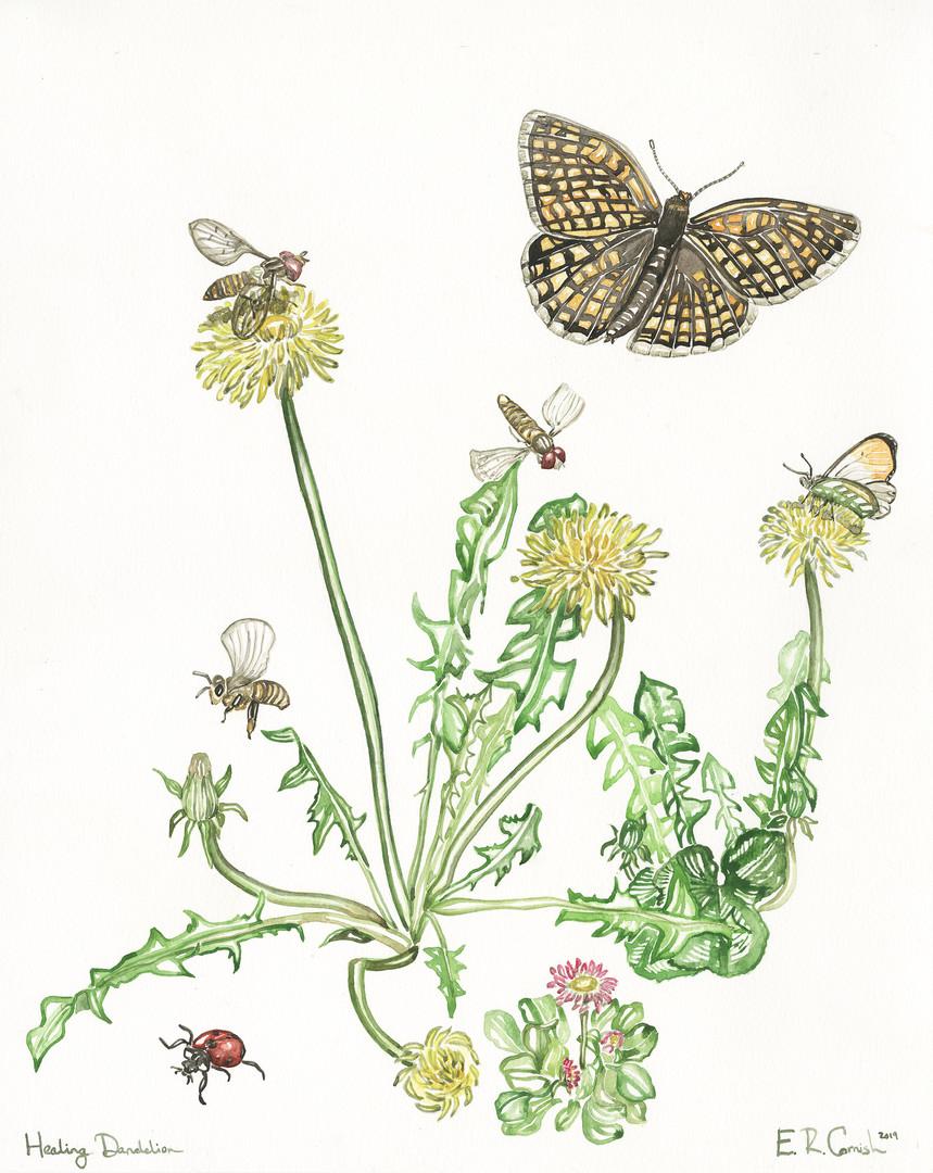 Healing Dandelion
