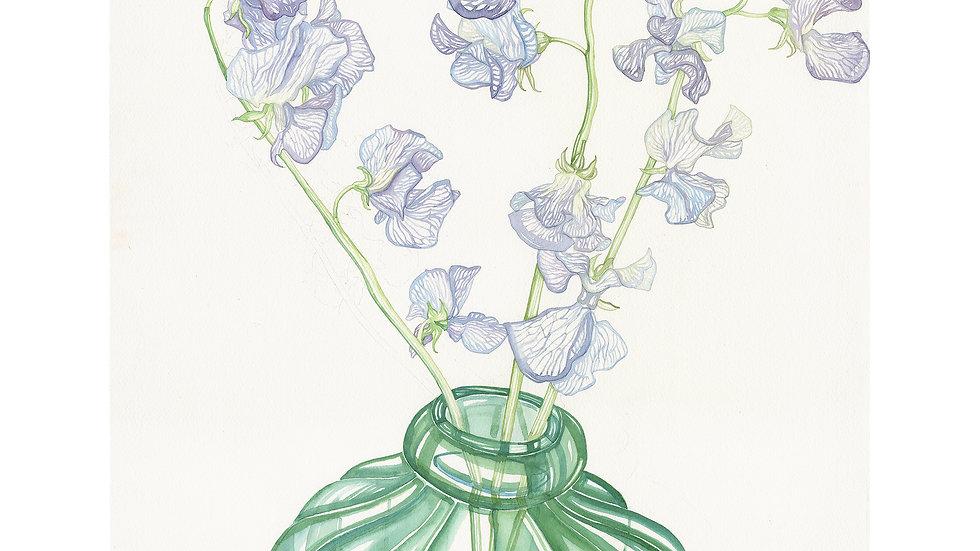Petit's Sweet Pea en Vase | 40 x 50cm limited edition print