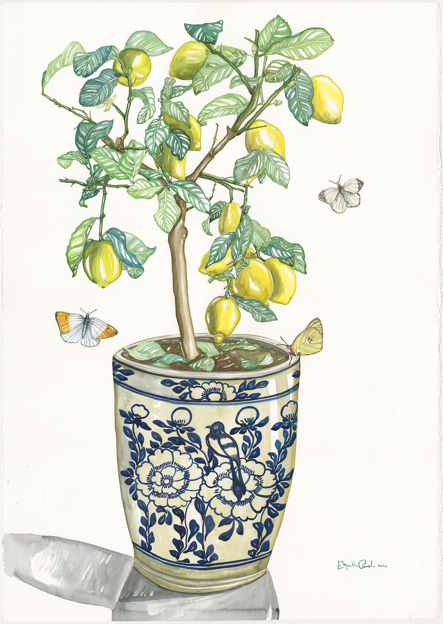 Lemon Tree and Butterflies