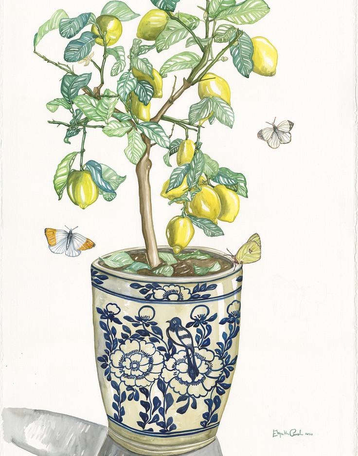 Lemon Tree and Butterflies
