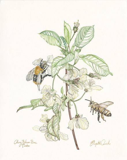 Cherry Blorrom Bees - samller file.jpg