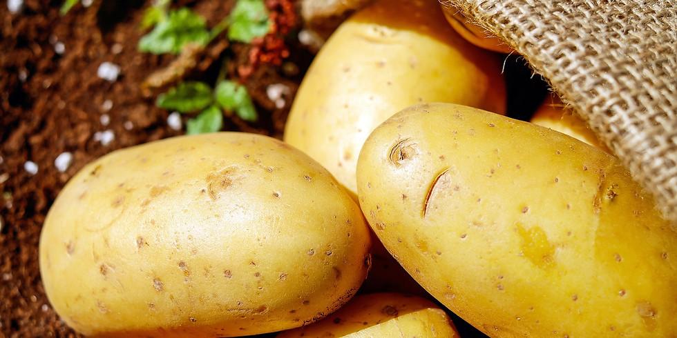 Growing Potatoes in Barrels