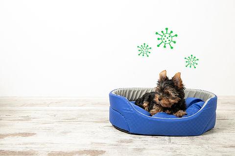 Dog_Bed.jpg
