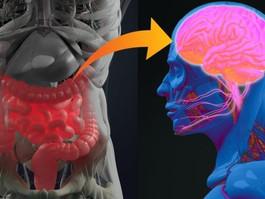 Retirar o apêndice pode diminuir riscos de ter doença de Parkinson, diz pesquisa