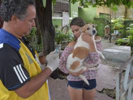 Campanha de vacinação antirrábica começa neste sábado (24), na zona norte do Recife