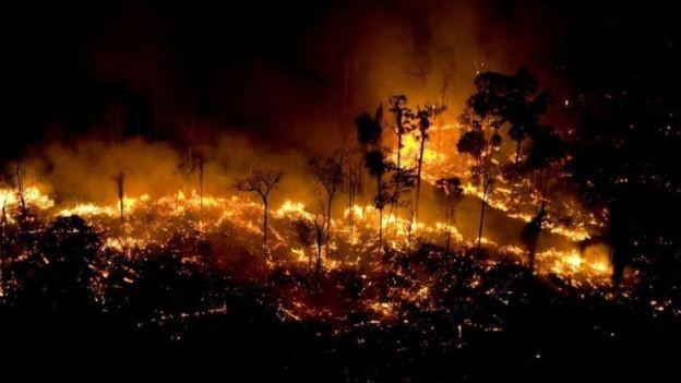 Foto: Greenpeace /Divulgação