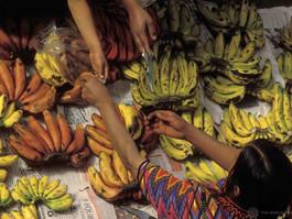 Nutrição: revista lança série de artigos sobre Década de Ação da ONU