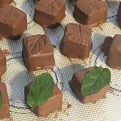 Rhubarb & Chocolate Mint.JPG