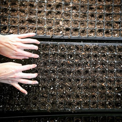 Earth Tones in Seed Tray Major #organic #localfood #earthsong