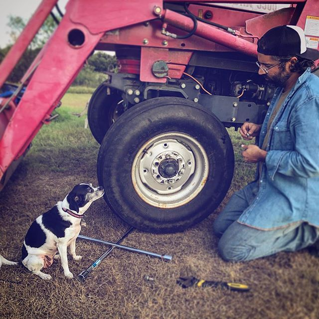 Miss Lula thinks she's helping #flattire #shethinksmytractorssexy #doghelper #farmlife