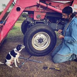 Miss Lula thinks she's helping #flattire #shethinksmytractorssexy #doghelper #farmlife
