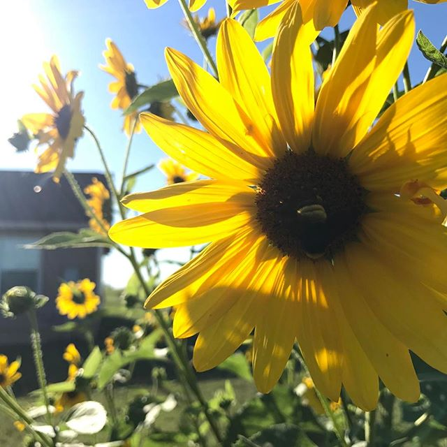 Sunny days make sunny flowers #flowerpower #flowermagic #flowerstalking