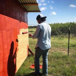 Just a man painting his barn #goatdaddy #farmlife #redbarn
