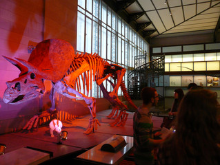 Besuch des Museums für Naturwissenschaften in Brüssel
