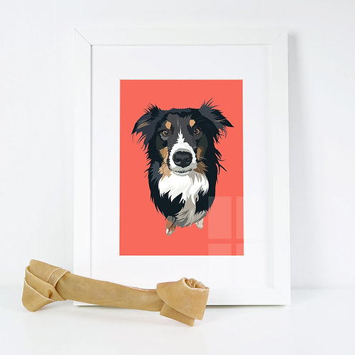 Border Collie Dog Illustrated Art Print