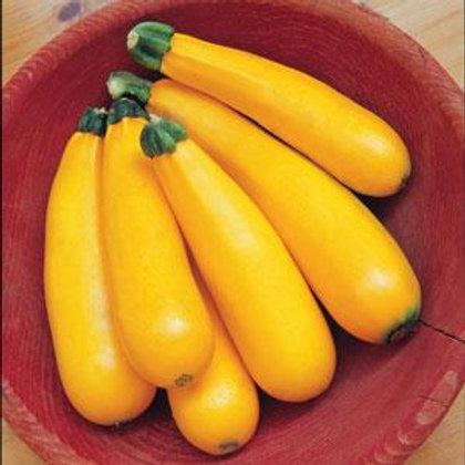 Squash - Zucchini - summer squash