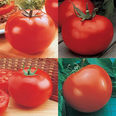 Tomato - Fantastic