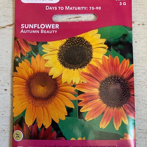 Seed - Sunflower Autumn Beauty
