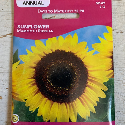 Seed - Sunflower Mammoth Russian