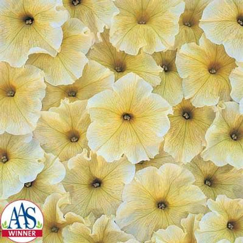 Petunia upright - Prism Sunshine