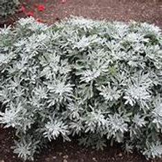 Artemisia - Fancifillers Sea Salt