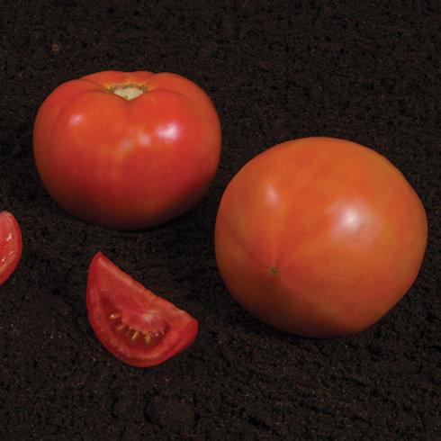 Tomato - Summerpick