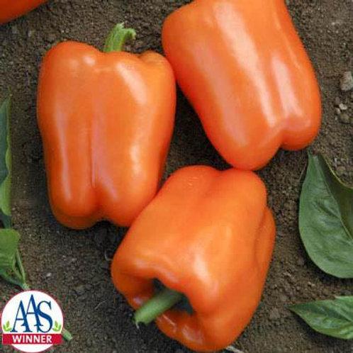 Pepper - Orange Blaze