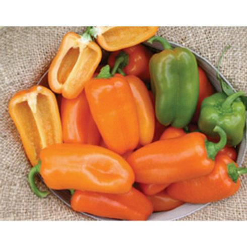 Pepper - Yummy