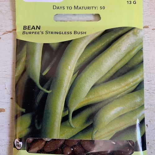 Seed - Bean Bush