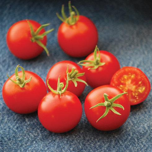 Tomato - 42-Day