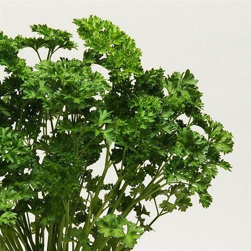 Parsley - Curly Leaf