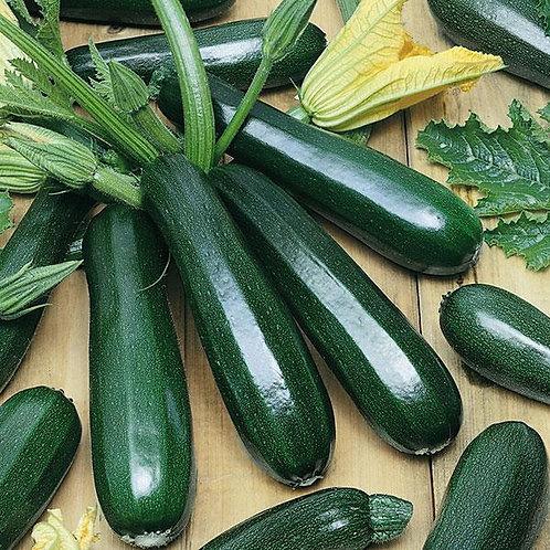 Squash - Zucchini - winter squash
