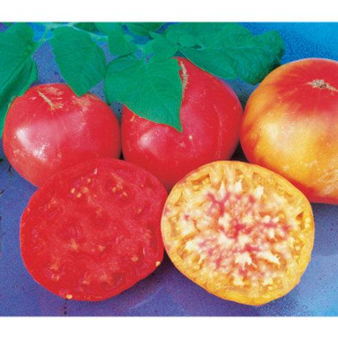 Tomato - Mr. Stripey