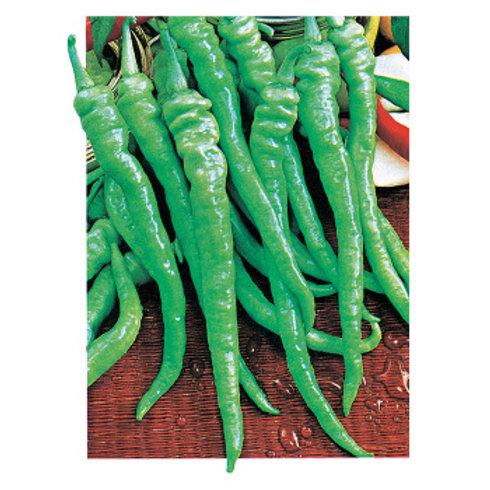 Pepper - Pepperoncini