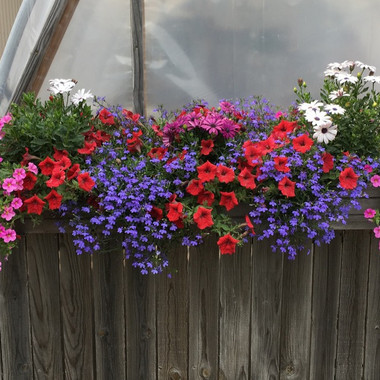 Window Box Mix
