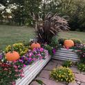 Pumpkins and Petunias